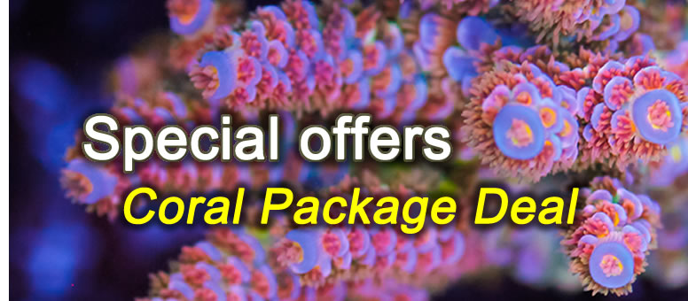 Special offer coral package deal